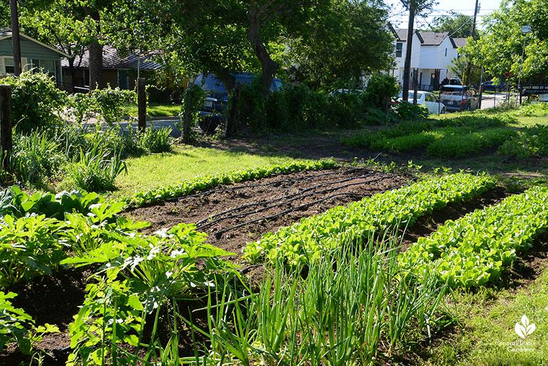 Este Garden small urban farm in old neighborhood