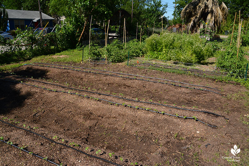 new farmer beds row-based vegetables Este Garden