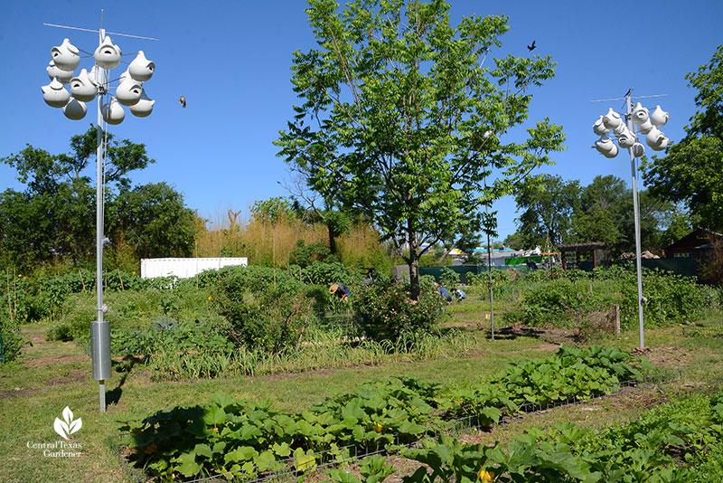 purple martin houses Este Garden