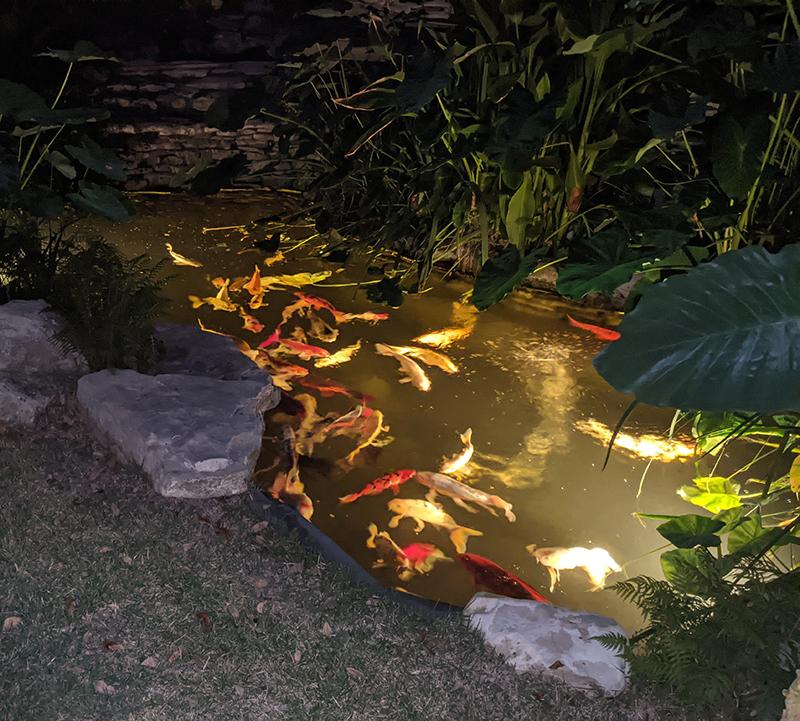 ad Michelle_pond Austin Pond Society