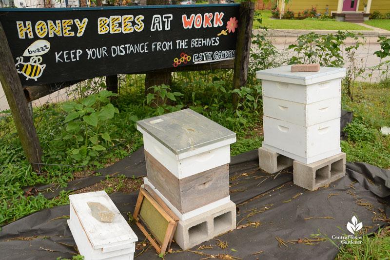 Two Hives Honey beehives at Este Garden