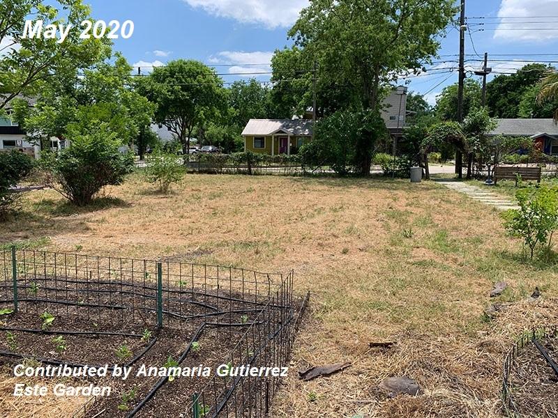 Bermuda grass Este Garden before picture May 2020