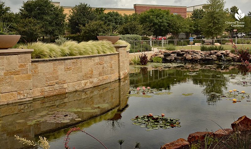 pond and waterfall at Dell Children's Hospital Central Texas Gardener