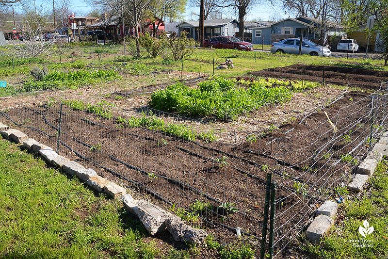 vegetable gardens newly planted Este Garden March 2021