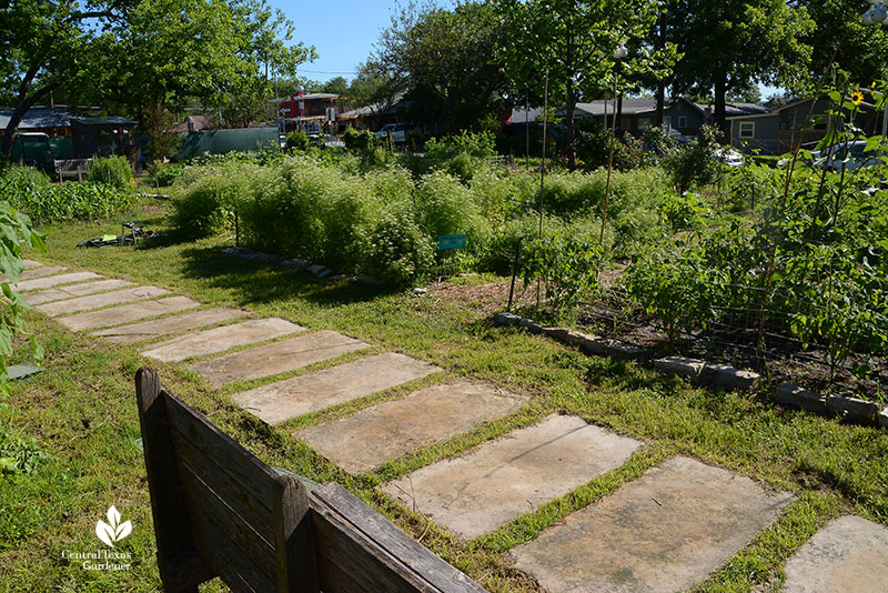 vegetable beds Este Garden May 2021