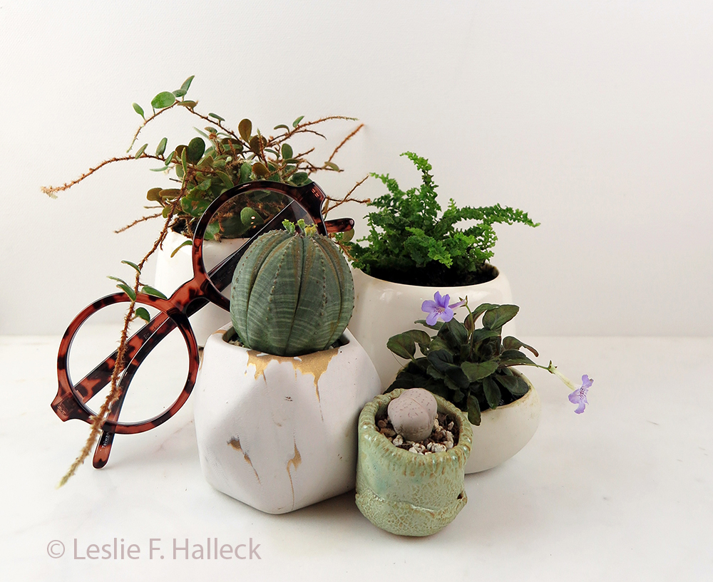 Several small plants in containers