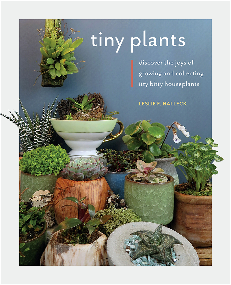 Tiny Plants book cover