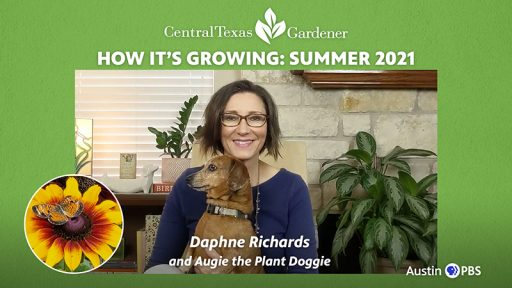 Daphne Richards and Augie dachschund What's Growing On