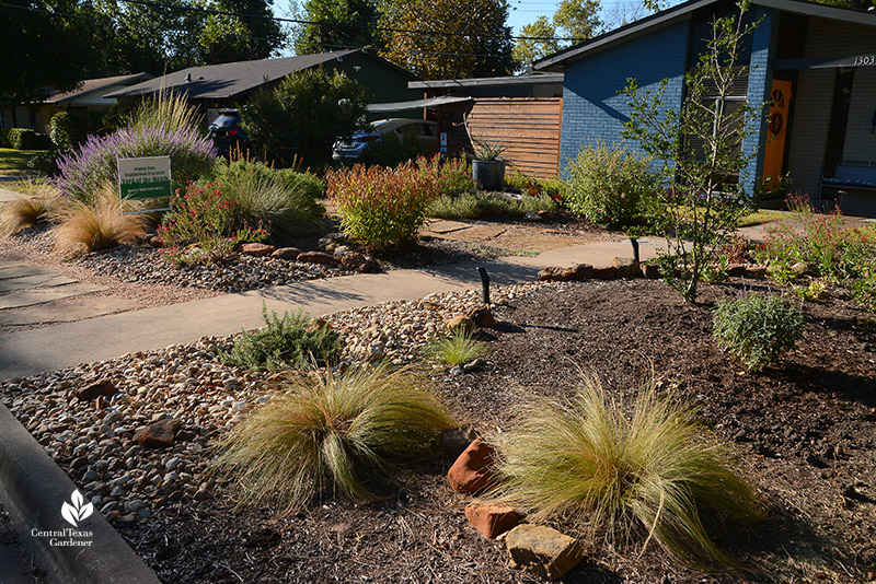 no lawn native plants Mexican feather Lindheimer muhly Salvias stone pathway