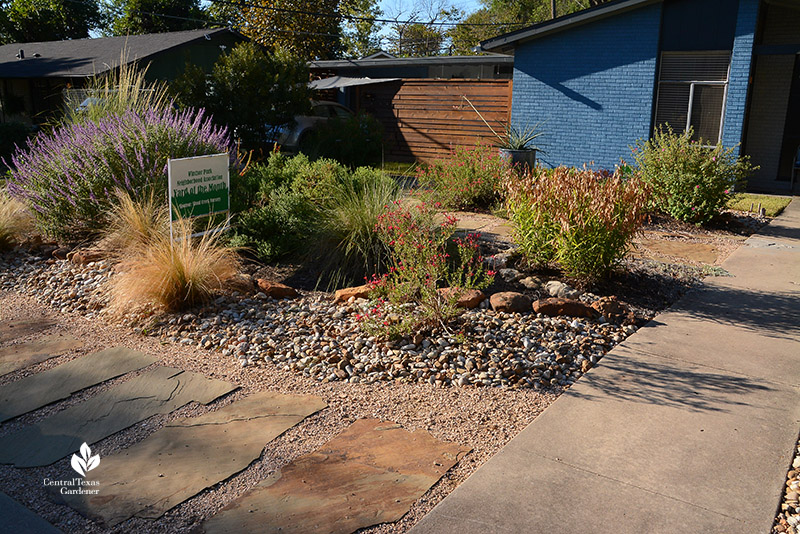 stone path sidewalk Lindheimer muhly, pavonia, salvias no lawn native plant front yard