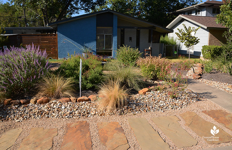front yard stone path Lindheimer muhly Mexican feather grass salvias native plants