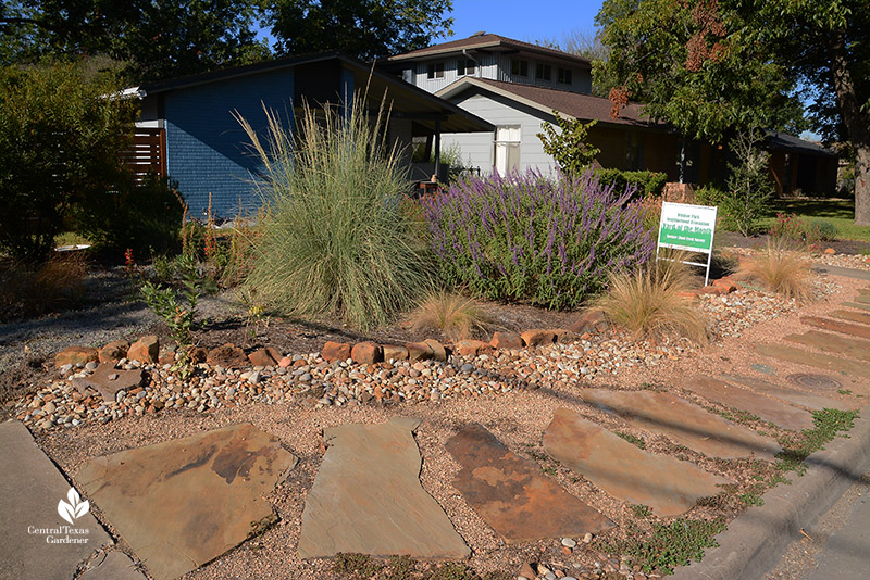 front yard stone path native plant garden Muhly grasses salvias Mexican feather grass