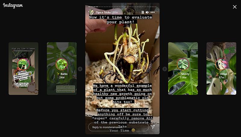 Chloe Phea Instagram semi-hydro plant tips
