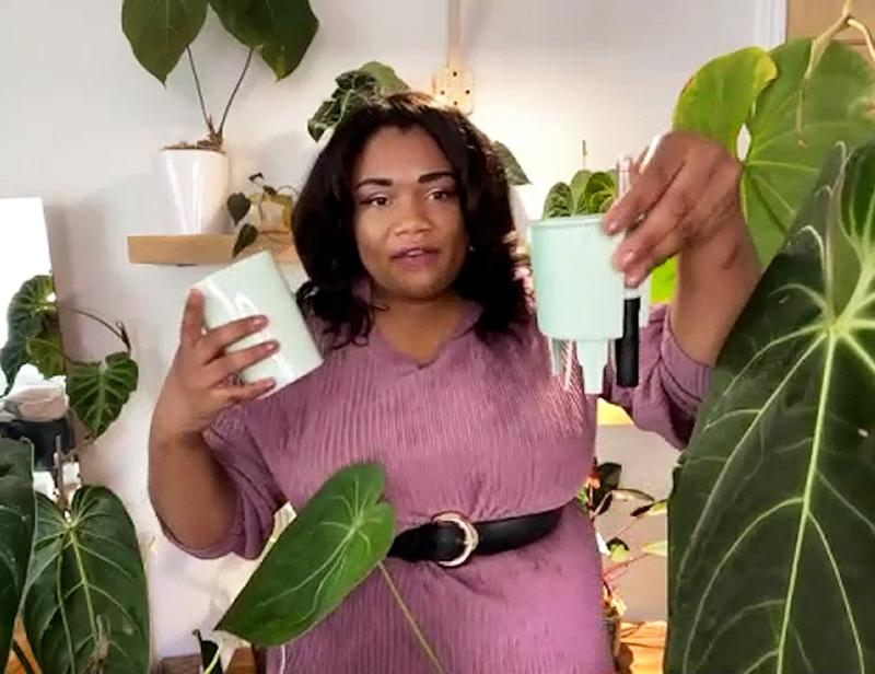Chloe Phea semi-hydro Lechuza pots and wick