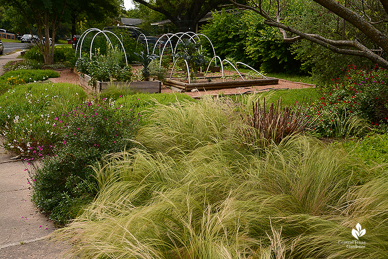 native plants and grasses