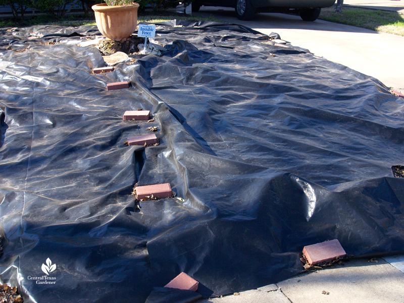 black tarp solarize lawn