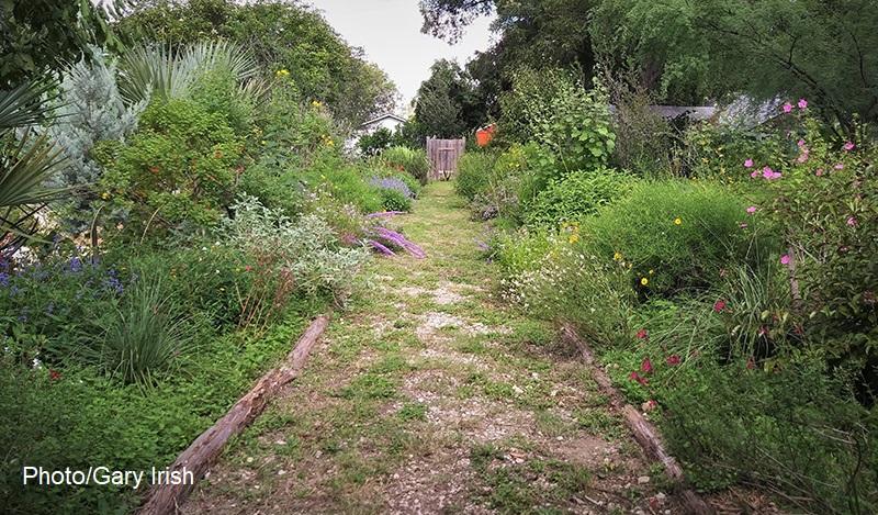 native plant border Mary and Gary Irish garden