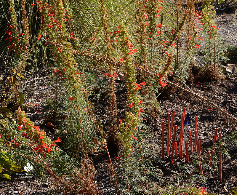 red chopsticks garden art with standing cypress