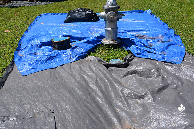 solarize lawn with tarps