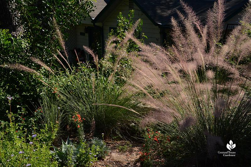 gregg's mistflower, muhly grass, standing cypress