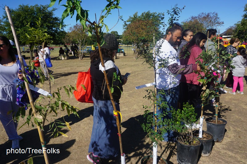 People picking up trees from TreeFolks
