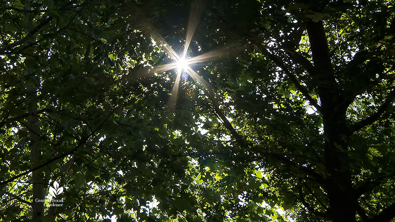 sunlight through tree leaves